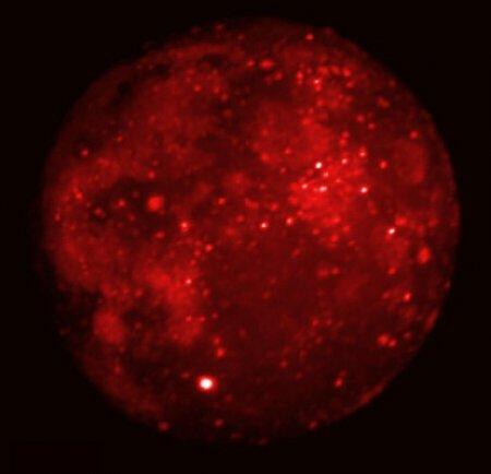 Затмение Луны в инфракрасном свете